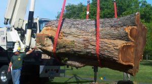 hohenshilt crane with large tree log