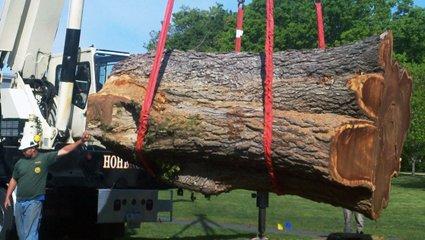 crane lifting up a tree stump